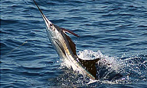 International Fishing Tournament of Martinique-October 31 to November 5, 2016