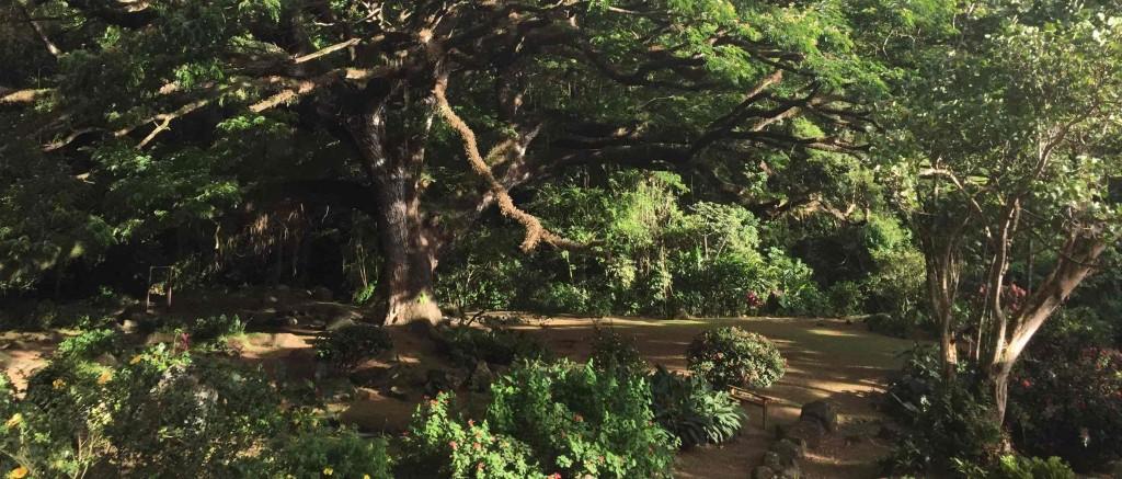 zamana_tree_21